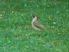 environnement,oiseaux,mouscron